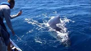 Video baleine film 2 300813 download MP3, 3GP, MP4, WEBM, AVI, FLV September 2017