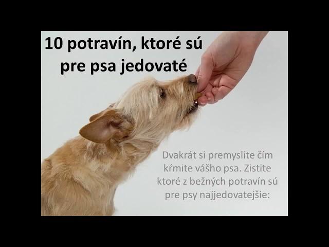 10 potravín, ktoré sú pre psa jedovaté