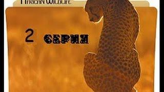 Удивительная природа Африки 2 серия