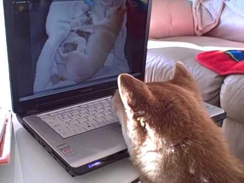 Kimiko still loves the Shiba Inu Puppy Cam