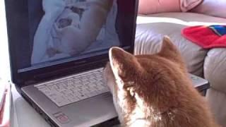【涙腺注意】子犬の動画を見つめる柴犬の表情がグッとくる
