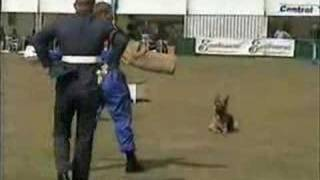 Air Force Dog Display