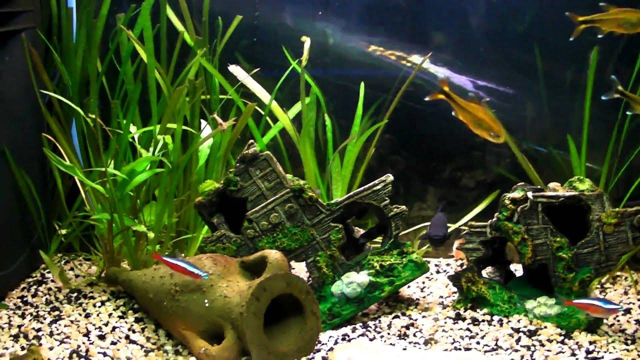 Acquario acqua dolce youtube for Arredo acquario acqua dolce