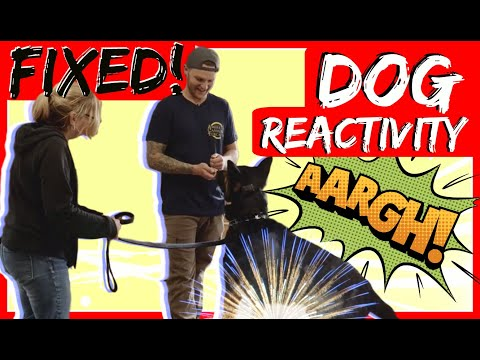 Aggressive German Shepherd attacks trainer during aggressive behavior training part 2