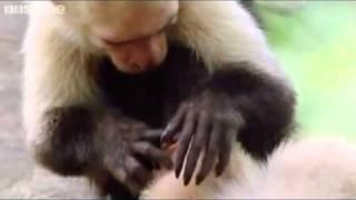 BBC One: Funny animals talking