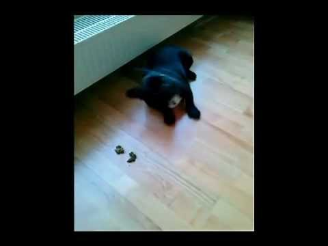 how to stop a puppy from eating his own poop