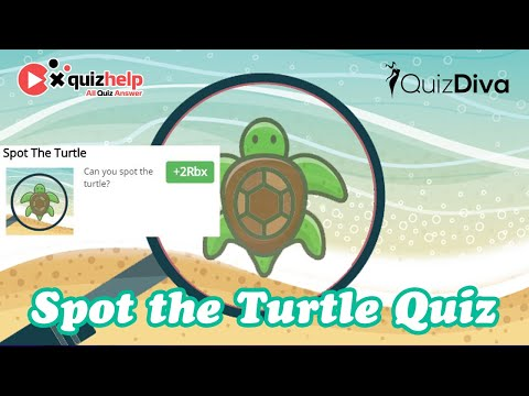Spot The Turtle Quiz Answers | + 2 Rbx | Quiz Diva | QuizHelp.Top