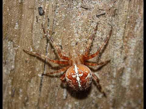 Самые Опасные пауки Украины - YouTube