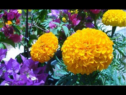 Curso CPT Como Produzir Plantas Ornamentais