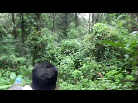 SABARIMALA _ERUMELI_ REAL FOREST JOURNEY