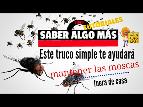 Full download como ahuyentar y eliminar las moscas de la - Como sacar las moscas de la casa ...