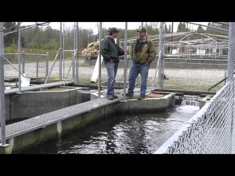 Opening Day Fishing In Washington Part 1: The Hatchery Component