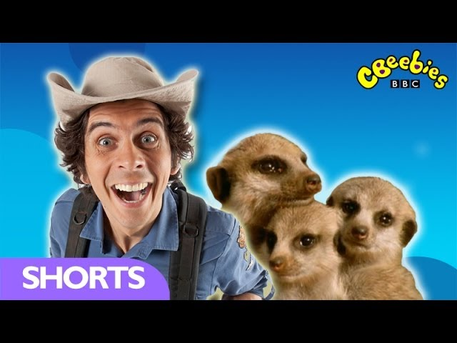 CBeebies: Andy's Wild Adventures - Meercats