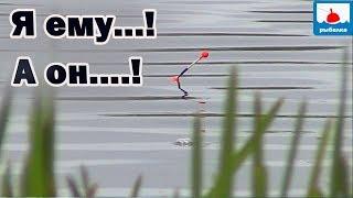 Этого карася не понять...Рыбалка на поплавок на другом озере.