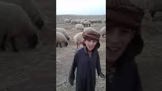 طفل راعي غنم لكن افضل من خريج جامعة ما شاء الله تبارك الله