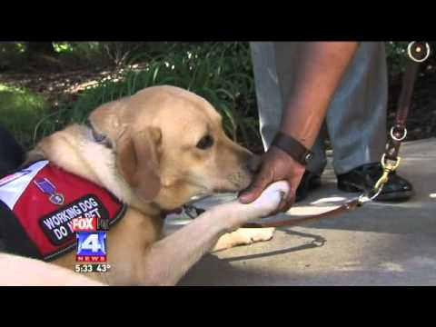 Service Dog Helps Veteran With Ptsd Youtube