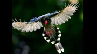 LAS AVES MÀS HERMOSAS DEL MUNDO, CANTO DE AVES.THE WORLD