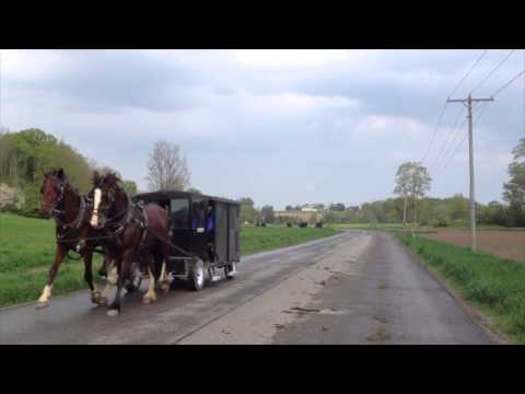 Mennonites out of St. Jacobs, Ontario, May 2013