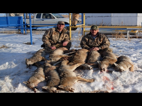 Coyote Hunting Competition Tips! How Hunting Competitions Work! Part 3