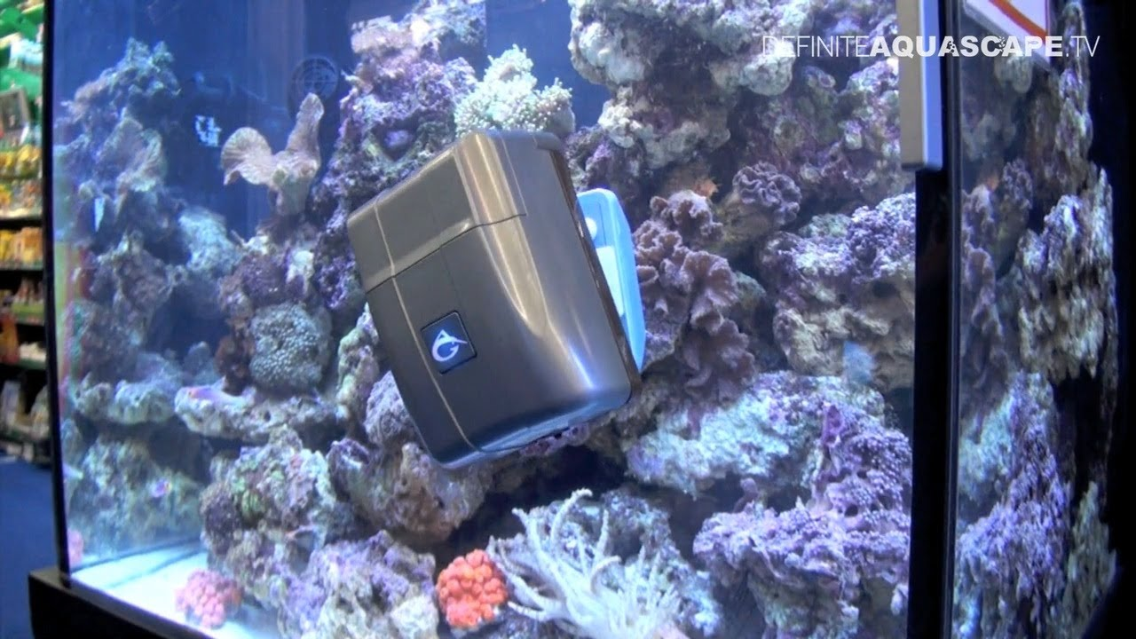 Robosnail or how to clean your aquarium 39 s front glass for How to properly clean a fish tank