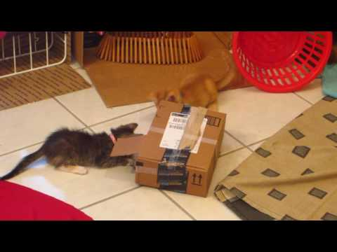 3 Funny Foster Kittens Hiding In & Playing With Amazon Box - 6 Weeks Old