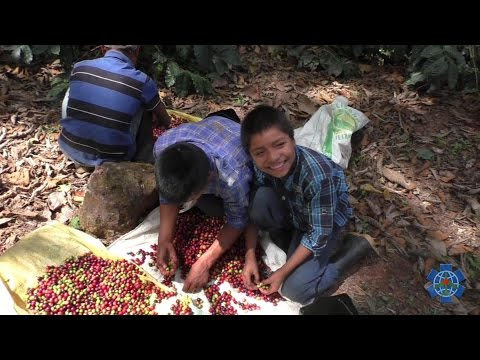 The Kids Who Pick Our Coffee