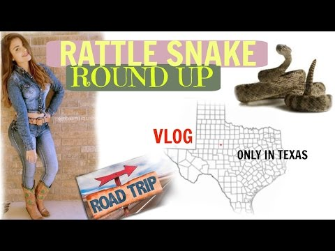 Rattle Snake ROUND UP,  Sweetwater TX 2017 (WARNiNG GRAPHIC IMAGES)