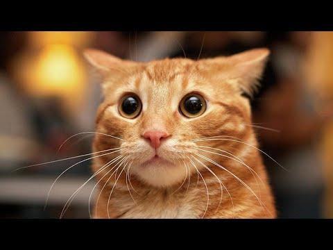 Под хит группы Грибы «Тает лед» танцуют даже коты - видео