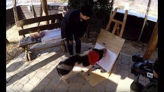 Pigcasso Holds An Art Exhibition | Kritter Klub