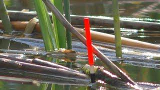 Рыбалка на поплавочную удочку Ловля на червя и перловку My fishing