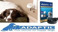 Does Adaptil (DAP) work? - Dog Science Explained