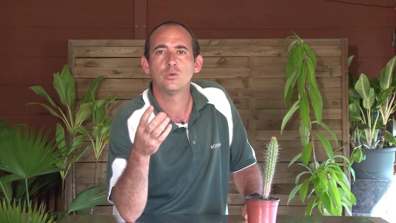 comment planter un cactus - YouTube