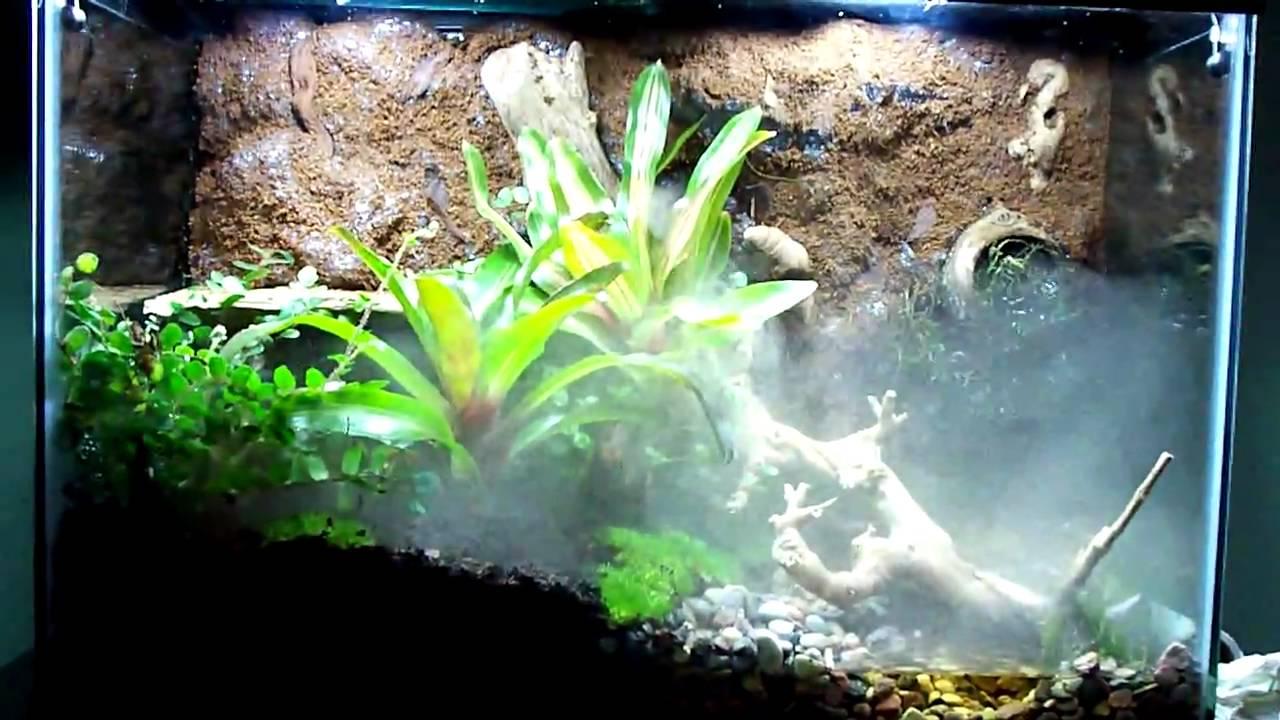 Vivarium Leucomelas Poison Dart Frogs Youtube