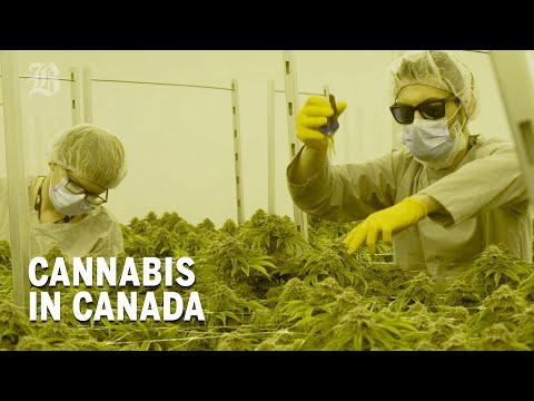 What We Can Learn From Canada's Cannabis Experiment | Boston Globe