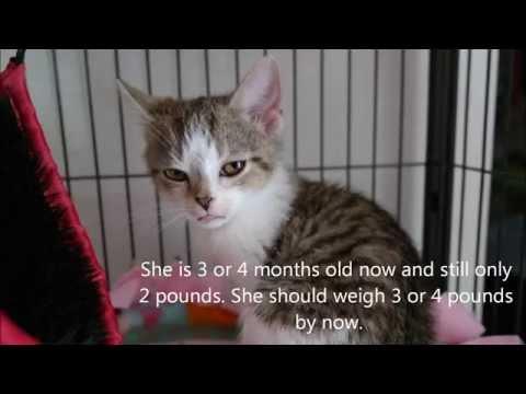 My Foster Kitten's Special Needs!!