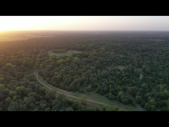 Almost 1000 acres of Hallettsville TX area land will make a great hunting ranch or wildlife preserve