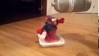 Torture Me Elmo - Ice Edition