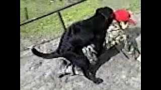 Трахающая собака