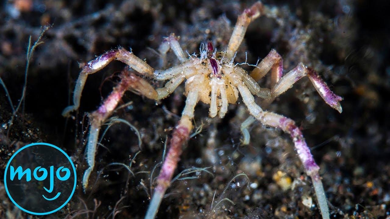 Top 10 Creepiest Underwater Creatures That Actually Exist