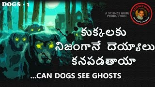 Can Dogs Really See Ghosts|కుక్కల�...