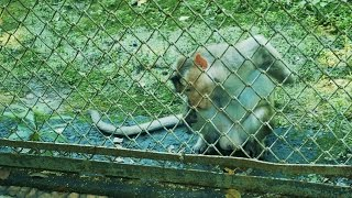depressed wild animals in cages