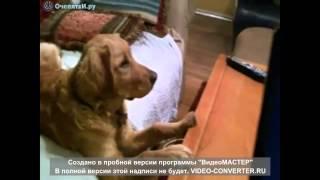 Пёс смотрит сериал