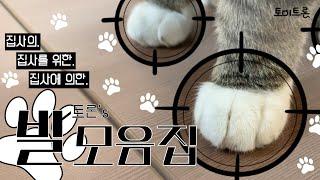 [장난감 나라의 트론이] 고양이 트론이 발 모음집 │ …
