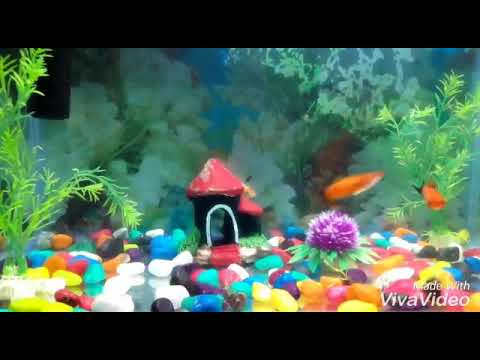 Best Fish tank (Fresh water aquarium)