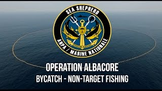 Operation Albacore: Distressing Footage of the Devastating Impacts of By-Catch.