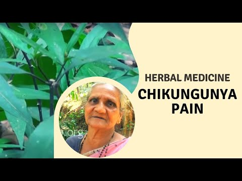 Herbal remedy for Chikungunya pain