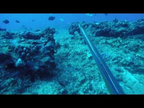 Spearfishing Hawaii Kauai 2