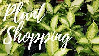 Plant Shopping in Arvada + Westminster