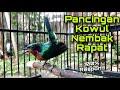 Pancingan Kolibri Wulung Nembak Cocok Untuk Masteran Agar Kolibri Macet Cepat Bunyi Kolibri Kaca  Mp3 - Mp4 Download