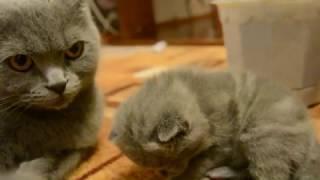 Дневник котят #2 | День 14 - Котята на прогулке